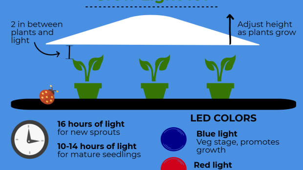 grow-light-for-starting-seedlings