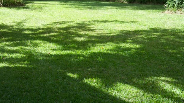 how-to-control-central-florida-lawn-pests