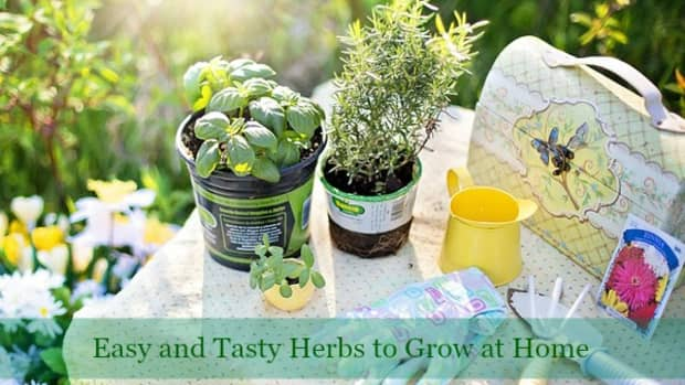 6-easiest-and-tastiest-herbs-to-grow
