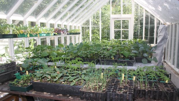 freestanding-greenhouse-for-all-plants