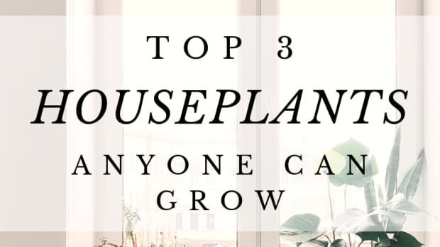 houseplants-anyone-can-grow