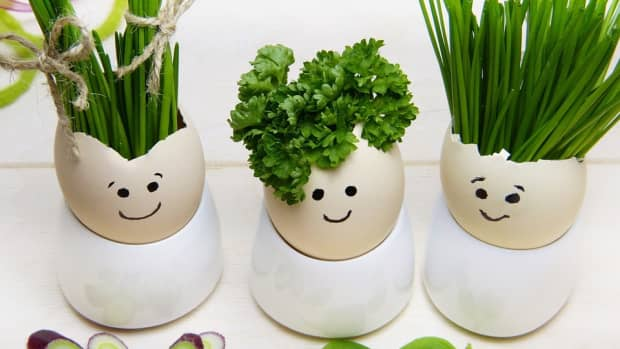 how-to-grow-parsley-like-an-expert