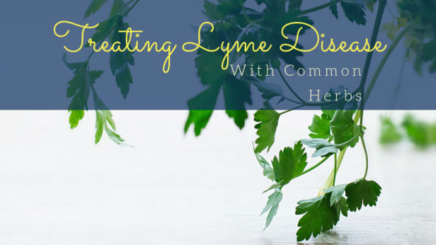 common-herbs-used-to-treat-lyme-disease