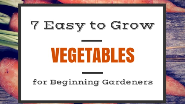 best-vegetables-for-the-wanna-be-gardener