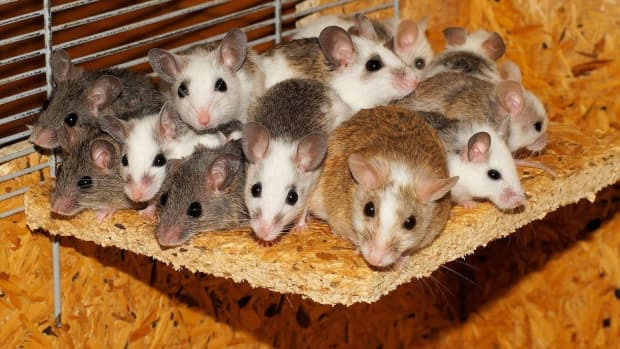 5-simple-ways-to-get-rid-of-mice-without-killing-them