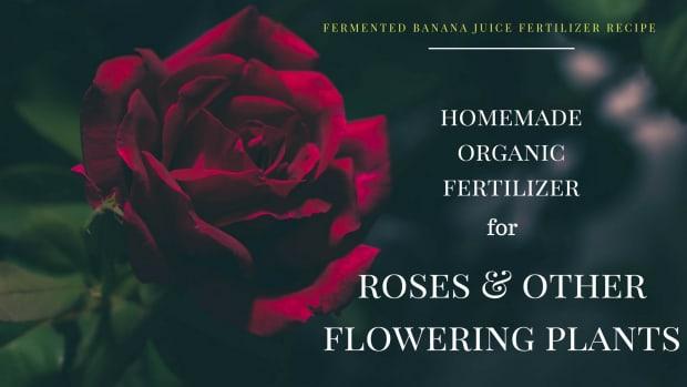 homemade-organic-fertilizer