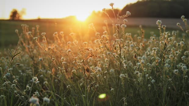 natural-effective-options-for-the-war-on-weeds