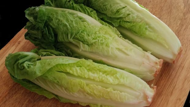 growing-romaine-lettuce-from-cuttings
