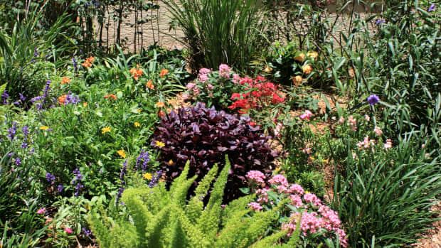 making-your-south-florida-flowerbed-beautiful-twelve-plants-that-thrive-in-the-sun
