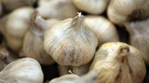 how-to-grow-garlic-indoors