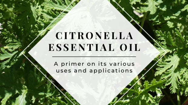 citronella-essential-oil-and-how-to-use-it