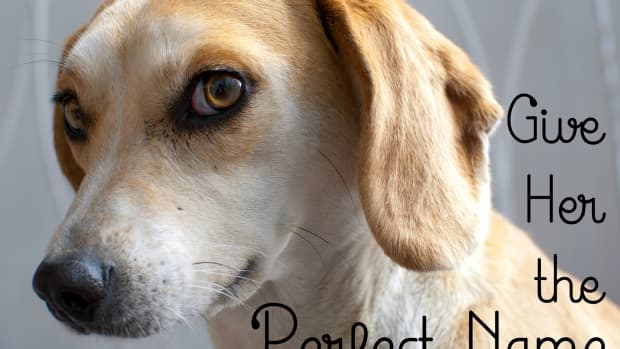 90-cute-female-dog-names-and-meanings