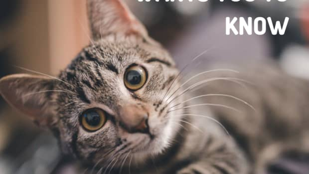 top-10-things-your-cat-wished-you-knew