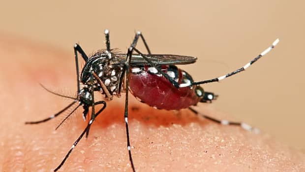 zika-virus-mosquitoes-and-microcephaly-a-worrying-infection
