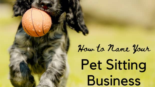 pet-sitting-business-names
