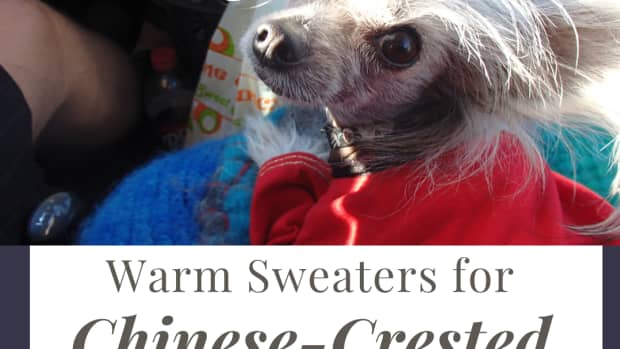 dog-sweaters-for-your-chinese-crested