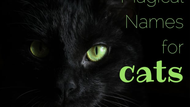 meaningful-kitty-names-33-magical-names-for-cats