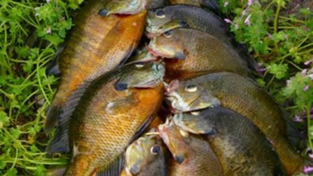 bream-fishing