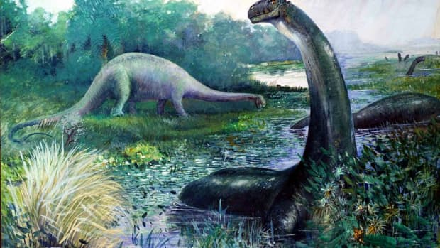 mokele-mbembe-a-living-sauropod-dinosaur-in-the-congo