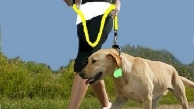 how-to-take-care-of-your-dog-before-during-and-after-exercise