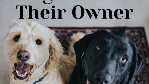 how-to-deal-with-two-dogs-fighting-over-onwer