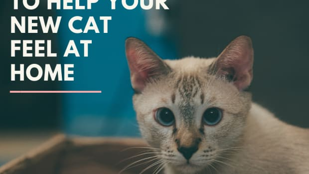 how-to-help-new-cat-feel-at-home