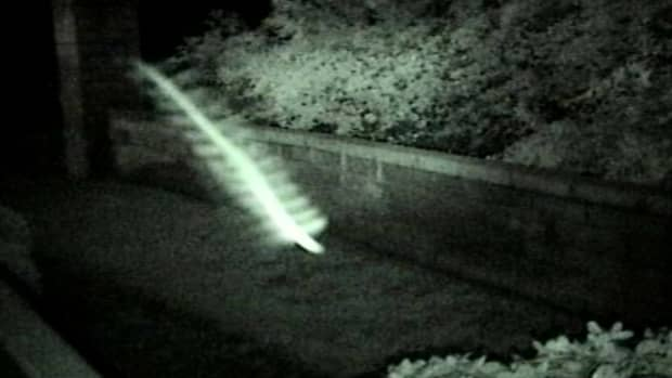 roswell-rods-a-new-species-or-a-technical-glitch