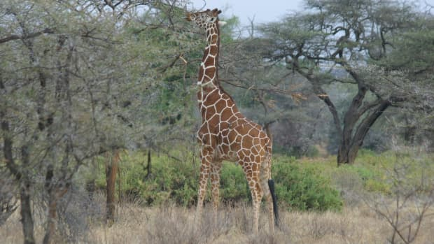 kenya-best-tourist-attractions-national-game-parks