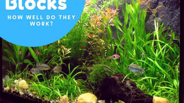 how-can-the-eco-bio-block-improve-my-aquarium-water-quality