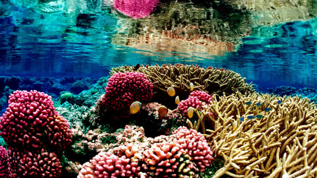 coral-bleaching-and-oxybenzone-choose-your-sunscreen-carefully