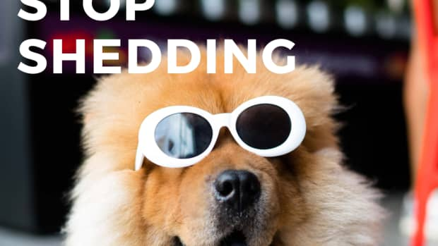 dog-shedding-all-over-house