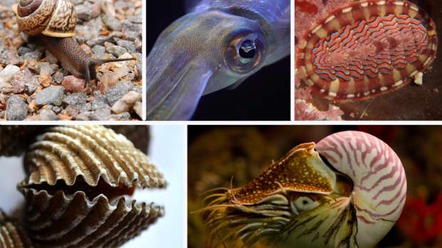 types-of-mollusc-with-pictures