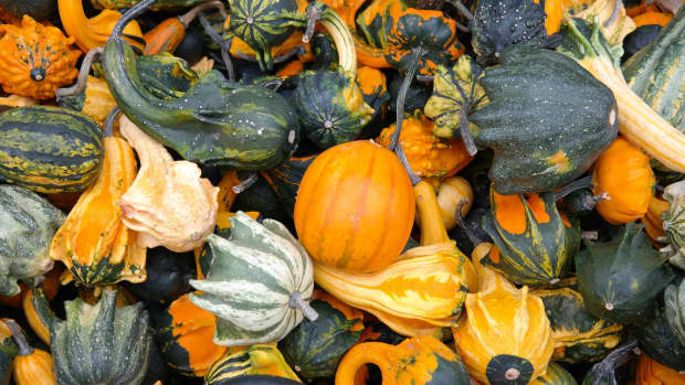 all-about-fruits-and-vegetables-pumpkin-and-other-squashes