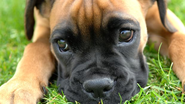 how-to-choose-the-best-dog-breed-for-your-health