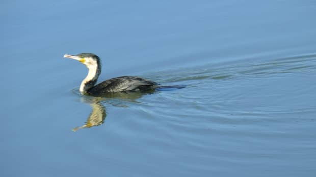 urban-birding-in-south-africa-no-2-pretoria-and-surrounding-areas