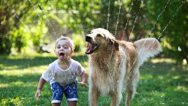 how-to-keep-your-child-safe-around-dogs-and-vice-versa