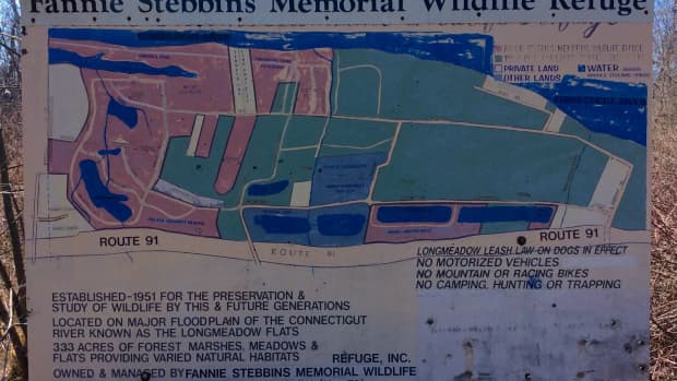 hiking-the-fannie-stebbins-memorial-wildlife-refuge-longmeadow-massachusetts