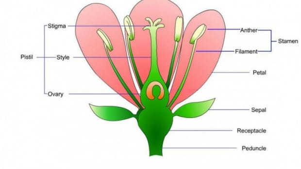 how-to-identify-common-plant-families-using-flowers