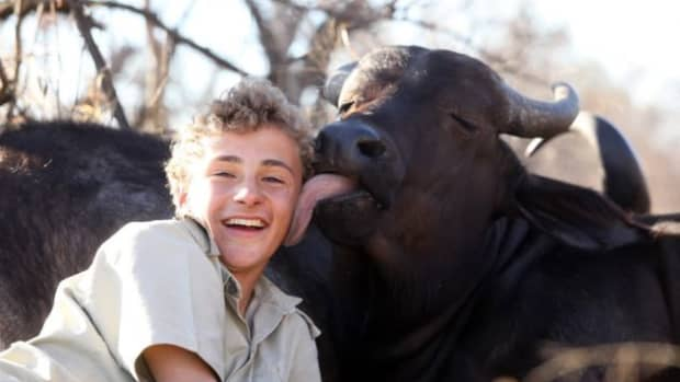 can-you-make-friends-with-a-cape-buffalo-part-2