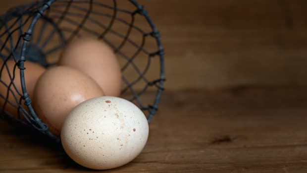 all-abouteggs