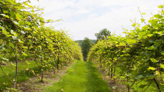 best-wineries-near-burlington-vt