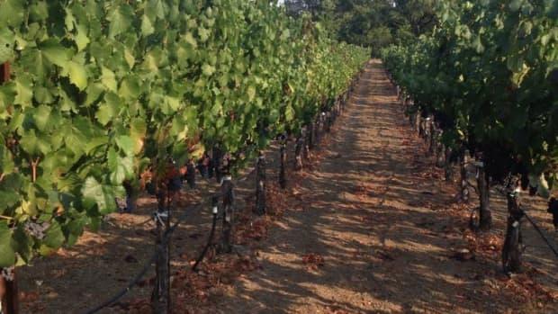 my-cheatsheet-for-wine-tasting