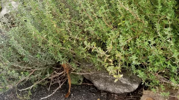 thyme-for-courage-and-saving-lives