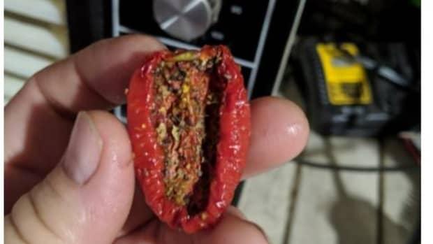 tomatoes-devoid-of-extra-moisture