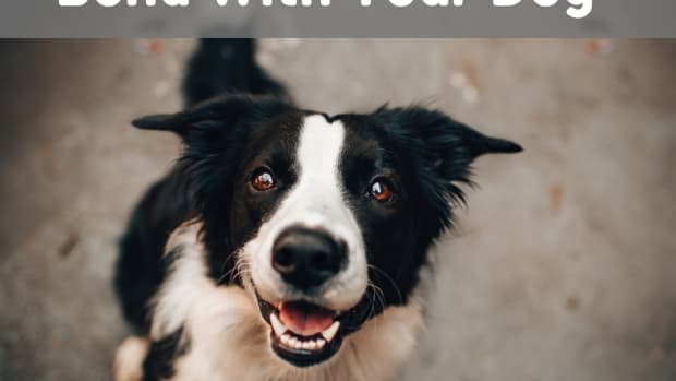 how-and-why-you-should-create-a-solid-bond-with-your-dog