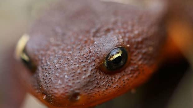 the-garter-snake-the-roughskin-newt-and-the-caddisfly