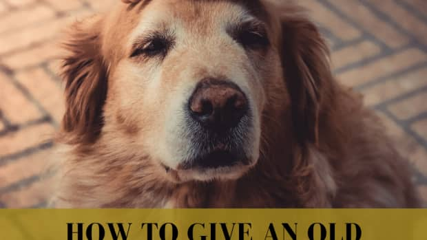 how-to-give-an-old-dog-the-time-of-his-life