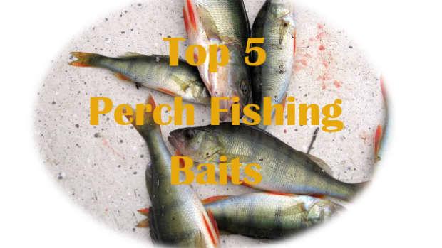 top-5-best-perch-baits