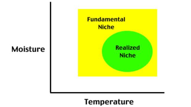 understanding-ellenberg-indicator-values-for-beginners