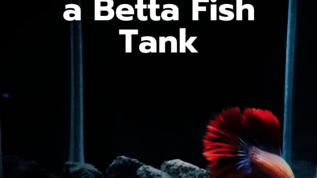 how-to-easily-clean-betta-fish-tanks